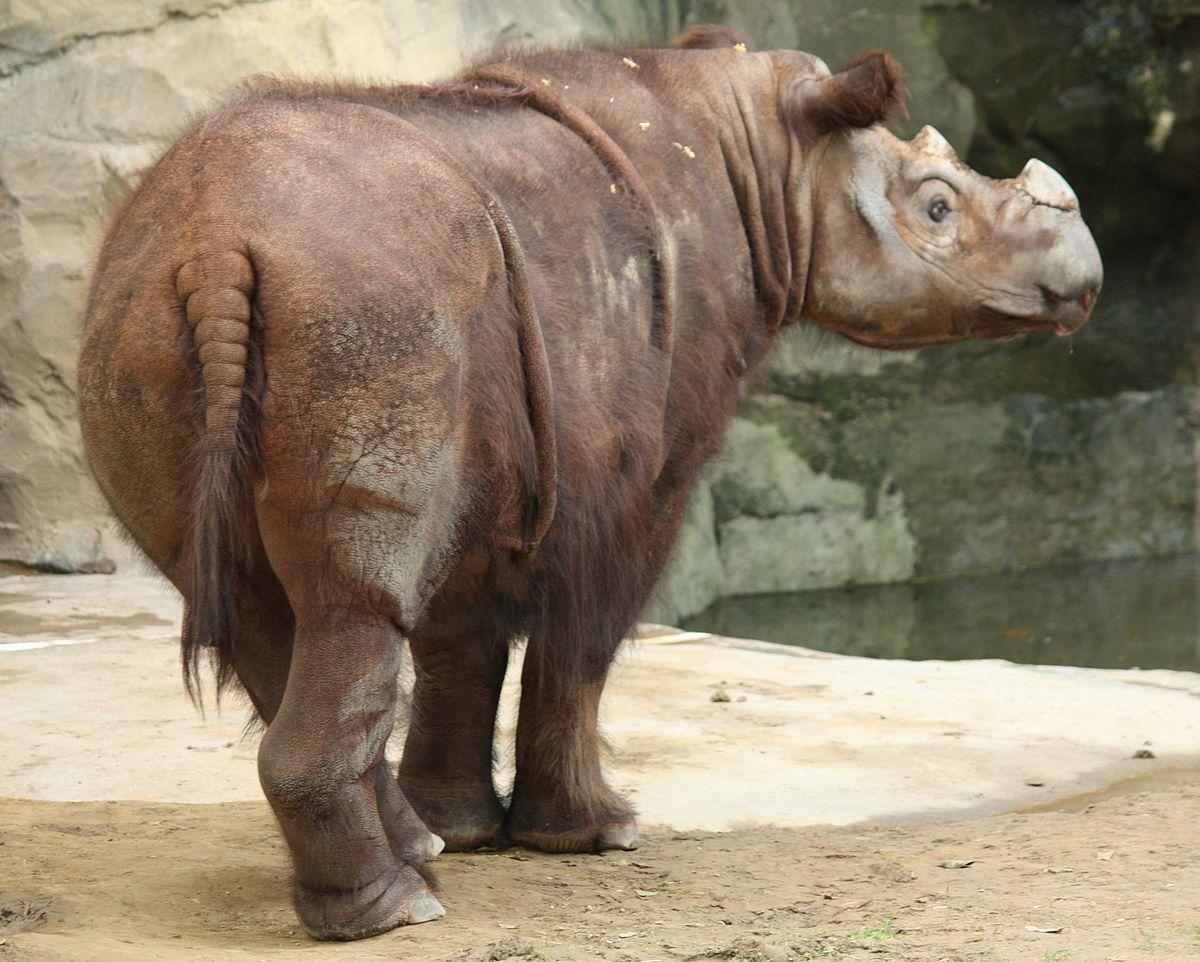 صور حيوانات منقرضة وسبب انقراضها , اسباب انقراض الحيوانات وانواعها