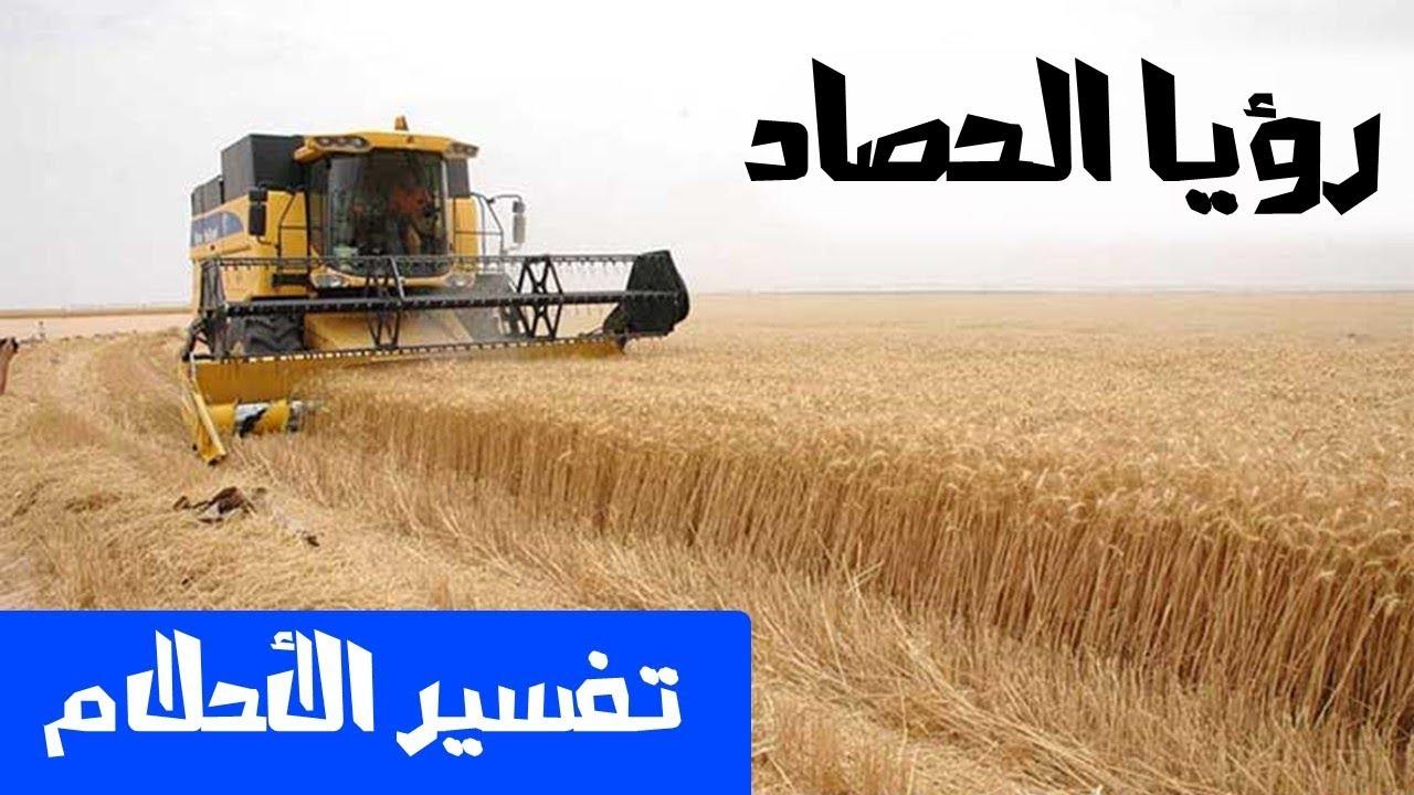 صورة تفسير حلم حصاد القمح , رؤيه حصاد القمح فى المنام