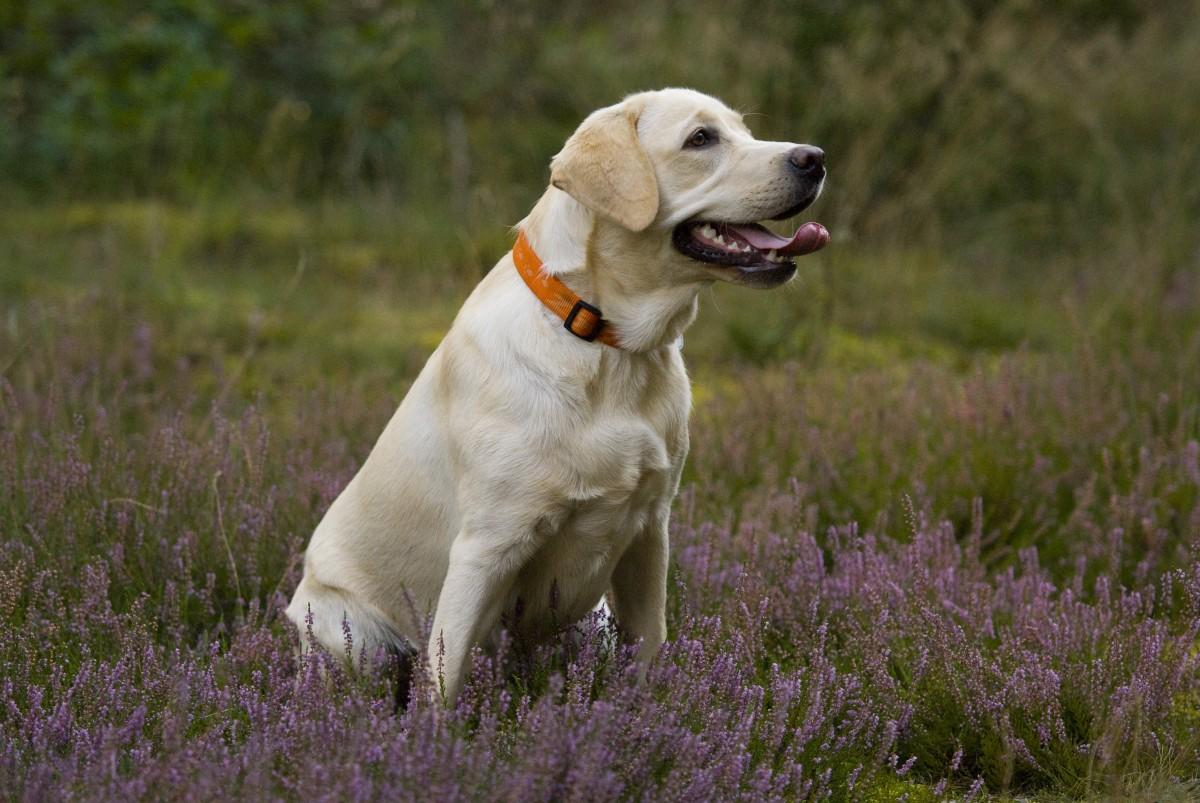 صورة رؤية الكلاب في المنام لابن سيرين , تفسير حلم الكلاب فى المنام