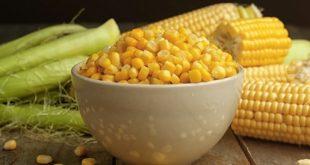 صورة فوائد الذرة المسلوقة للرجيم , الذرة المسلوقة وفائدتها فى التخسيس