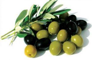 صورة تفسير حلم الزيتون الاخضر والاسود , رؤيه حلم الزتون فى المنام
