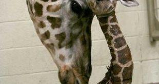 صور صور حيوانات حلوة , خلفيات للحيوانات النادره