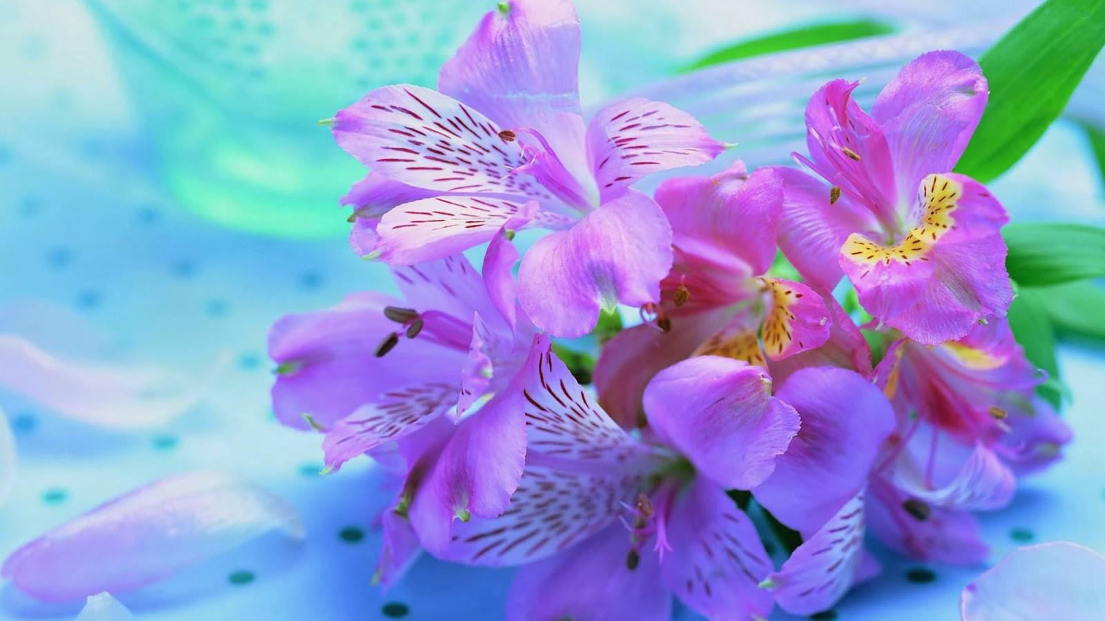 صورة خلفيات ازهار hd اتش دي , صور ازهار ملونه HD