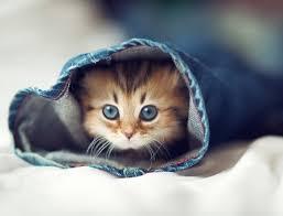 صورة صور بسس , اجمل صوره للاحلى القطط
