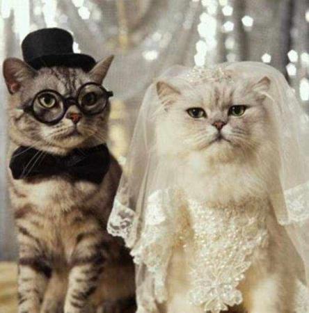 صورة صور قطط مضحكة , احلى الصور المضحكه للقطط