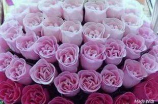 صور صور ورود روعه , الورد والزهور وجمال الطبيعة