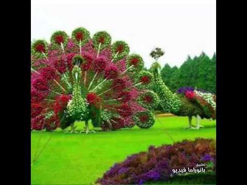 صور صور منظر طبيعي , المناظر الطبيعية والطبيعة والورد