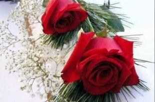 صور ورود رومانسية , الورد وجماله وزينة البيوت بالورد