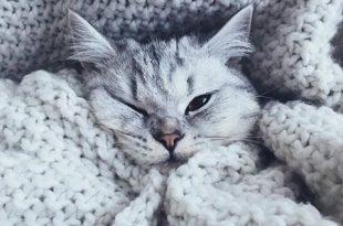 صورة خلفيات قطط , اجمل قطط في العالم