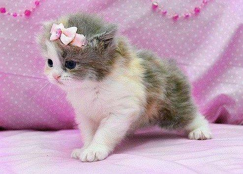صورة صور قطط , احلى خلفيات الهرره