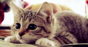 صور صور حيوانات , خلفيات حيوانات عاليه الجوده