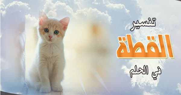 صور رؤية القطط بالمنام , تفسير الحلم بالهرره