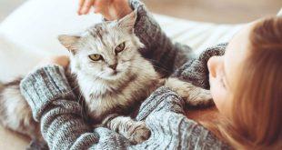 صورة افضل انواع القطط المنزلية , اجمل انواع القطط المنزليه