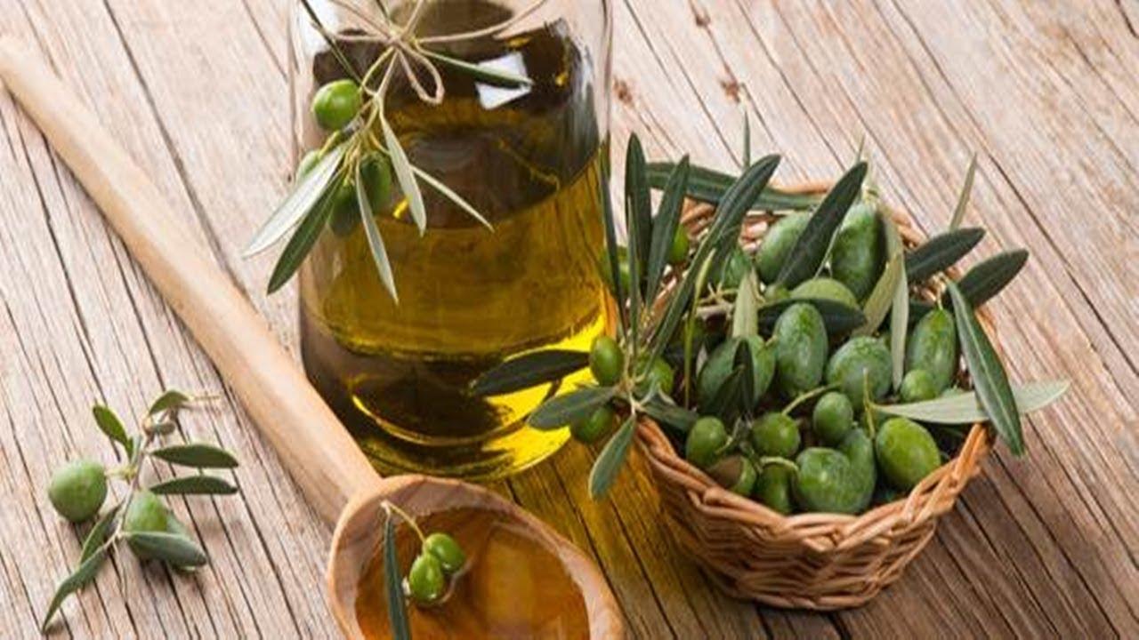 صورة فوائد اوراق الزيتون للشعر , اوراق الزيتون وفوائدها للشعر