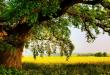 صور الشجر في المنام , تفسير رؤية الشجر في المنام