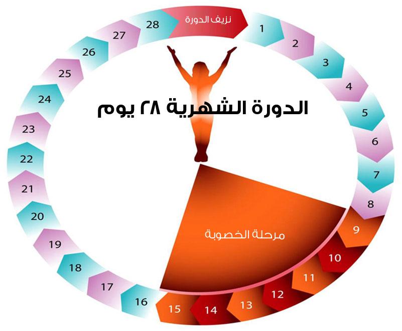 صور فترة الدورة الشهرية عند المراة , معلومات عن فترة الدورة الشهرية عند المراة