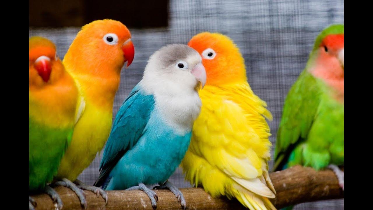 صور رؤية الطيور في المنام , تفسير رؤية العصفور في المنام