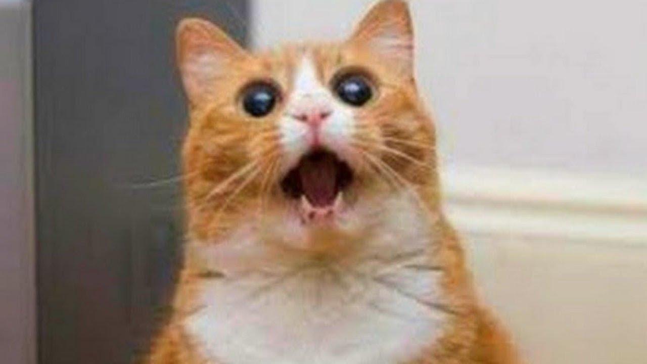صورة مواقف مضحكة للقطط , اجمل صور مضحكة