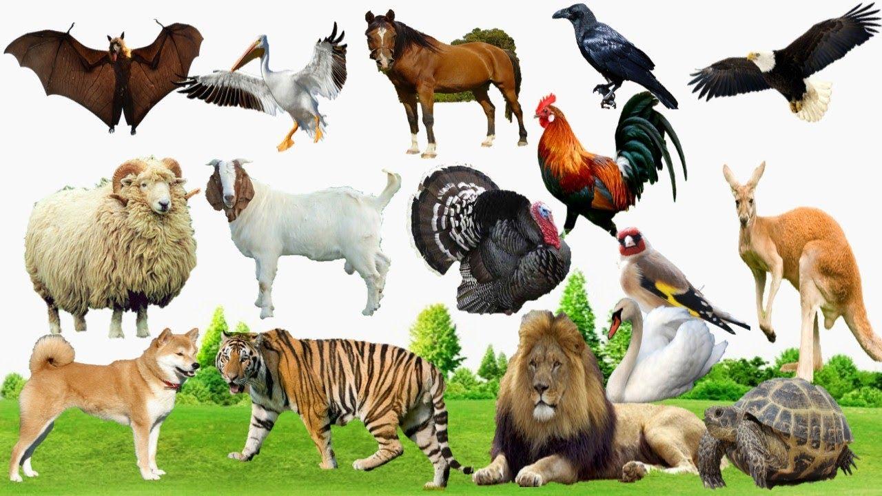 كتاب الحيوانات