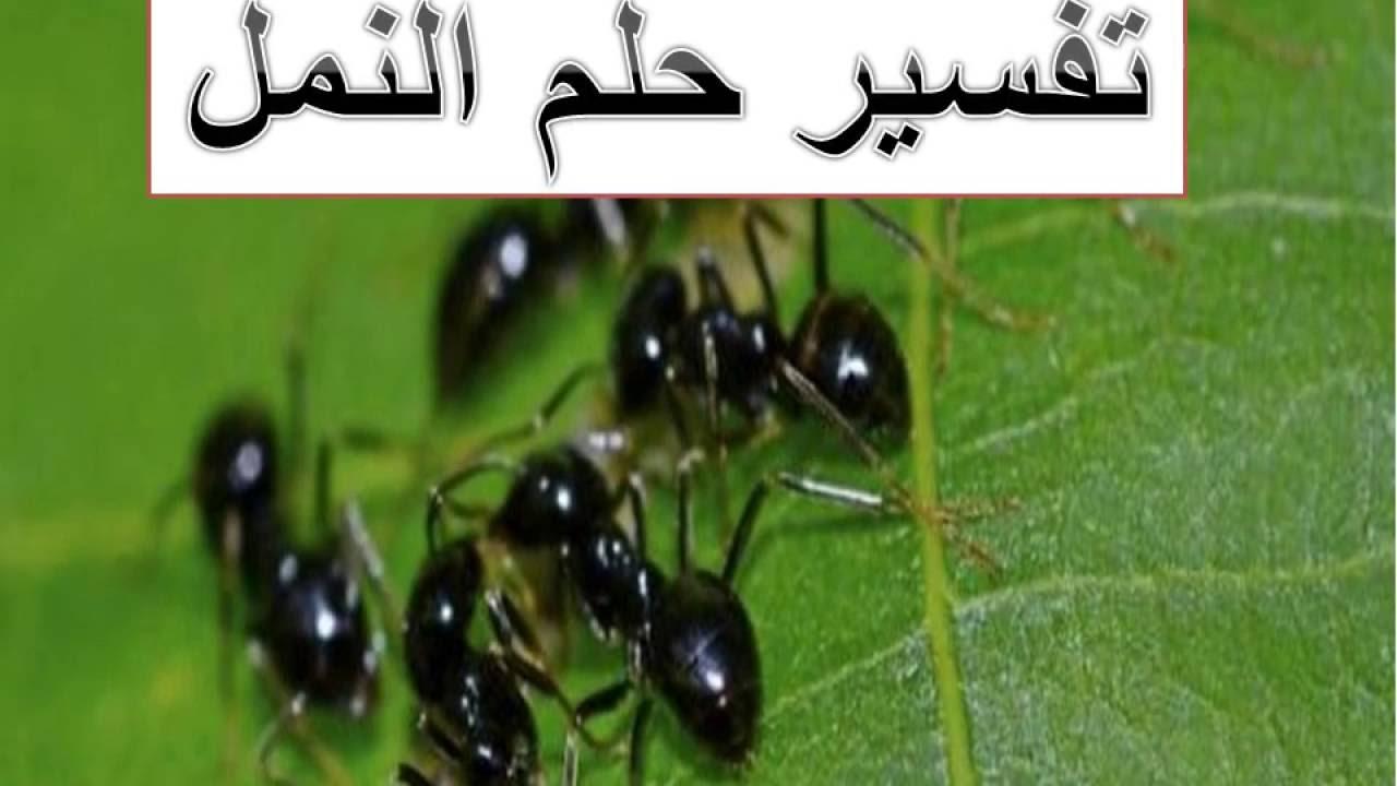 صورة تفسير الاحلام نمل , حلمت بنمل