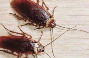 صورة تفسير رؤية الصراصير في المنام , ماذا يعنى الحلم بالصراصير