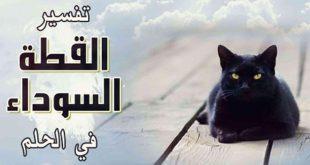 صور رؤية قطة سوداء في المنام , ماهو معنى الحلم بهرة سمراء