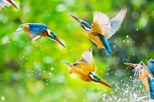 صور صور طبيعيه جميله , اجمل خلفيات المناظر الخلابه