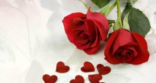 صور صور عن الورد , الورد و جماله بالصور و اشكاله