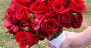 صور ورد حلوه , انواع الورود بالصور الجميله