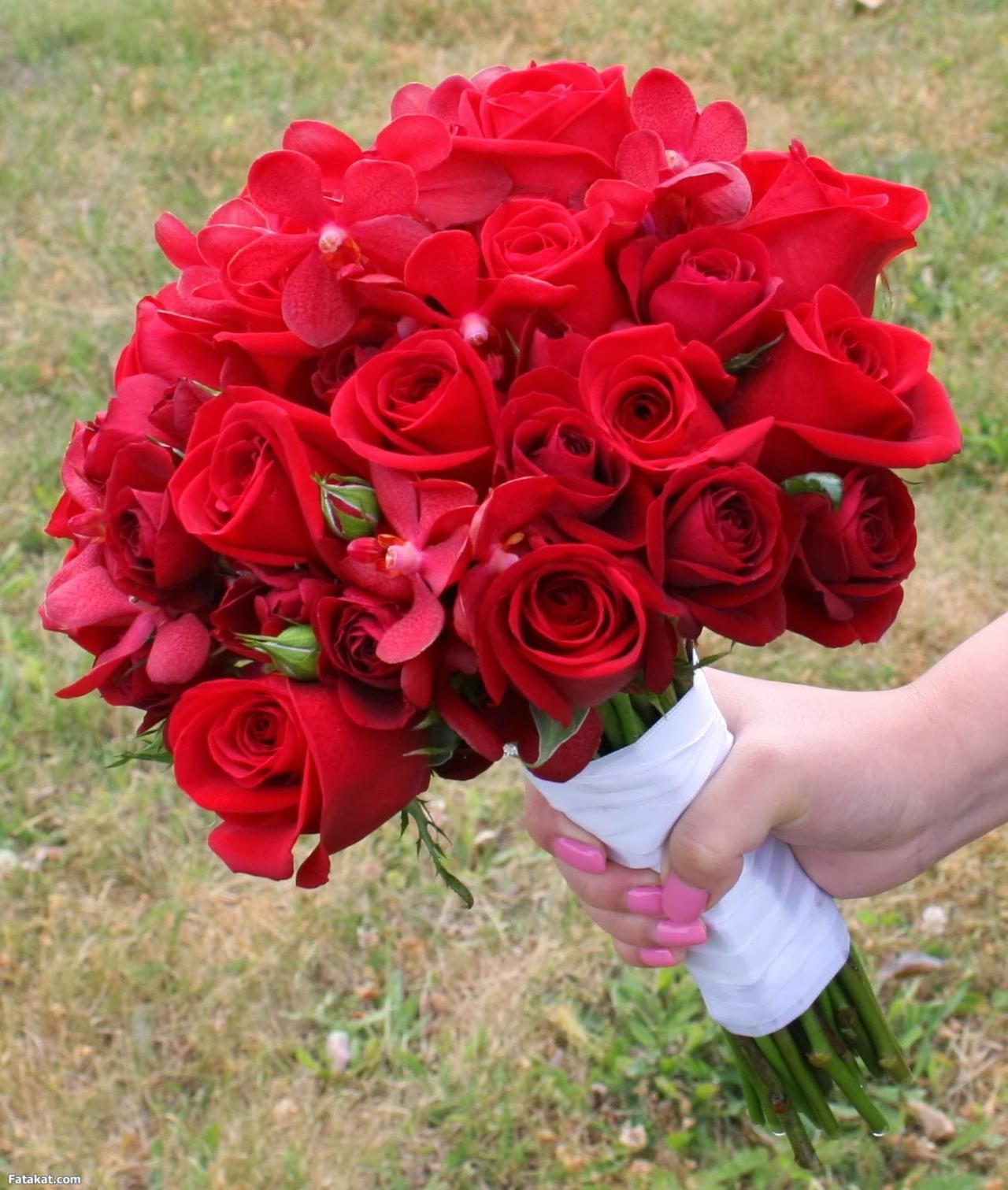 صورة صور ورد حلوه , انواع الورود بالصور الجميله