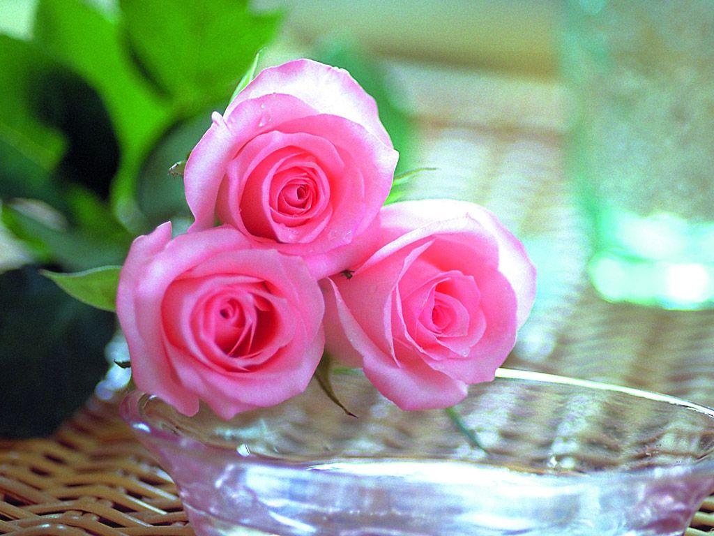 صور صور ورود جميله , الورد قادر يغير حياتنا