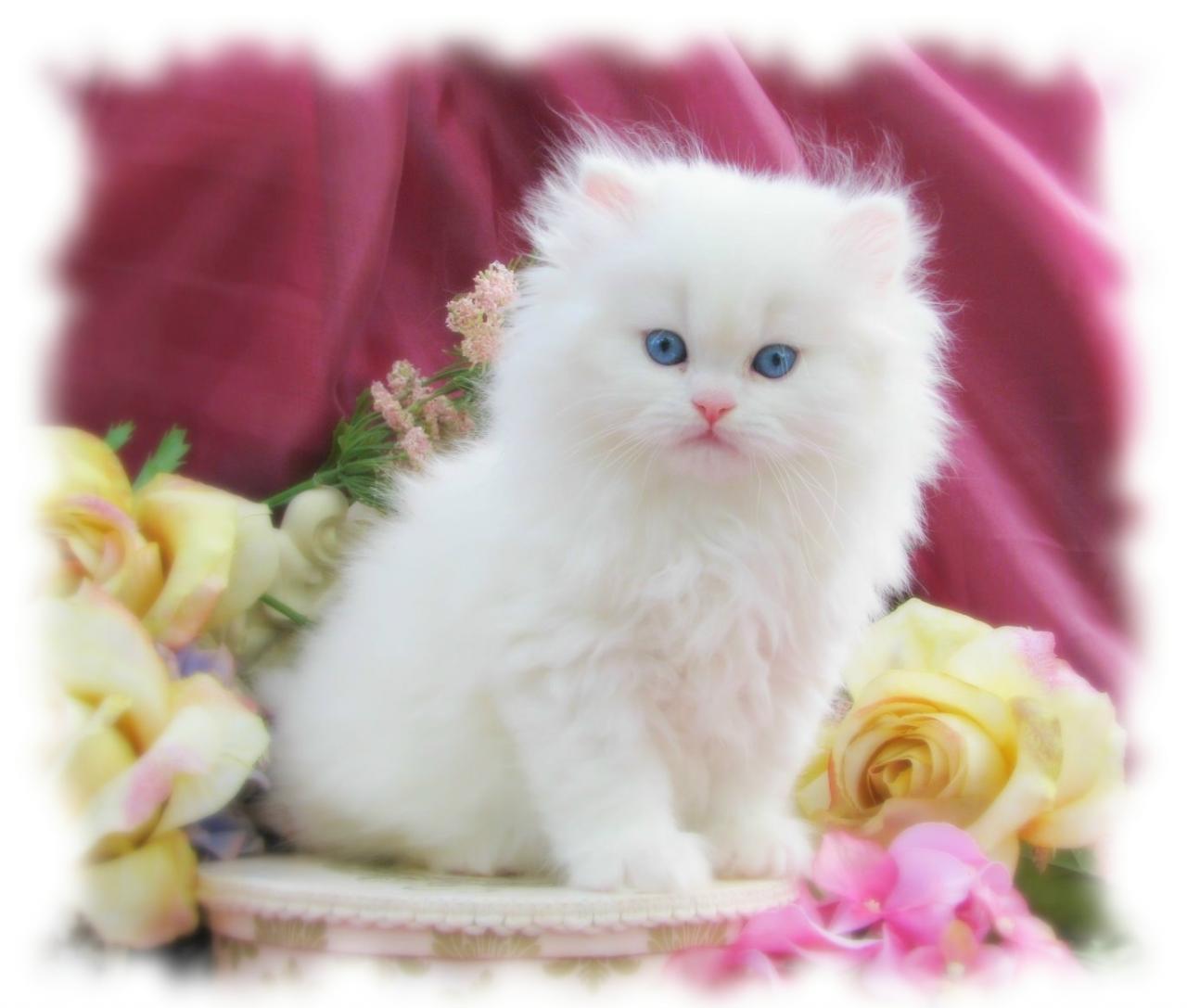 صور صور قطط متحركة , القطط اجمل الحيوانات الاليفه و اروعها