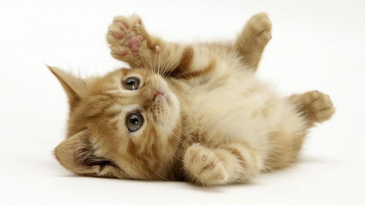 صورة صور قطط صغيرة , القطط الصغيره و حياتهم بالصور