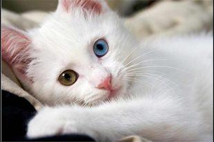 صورة صور قطط كيوت , اجمل القطط المميزه بالصور