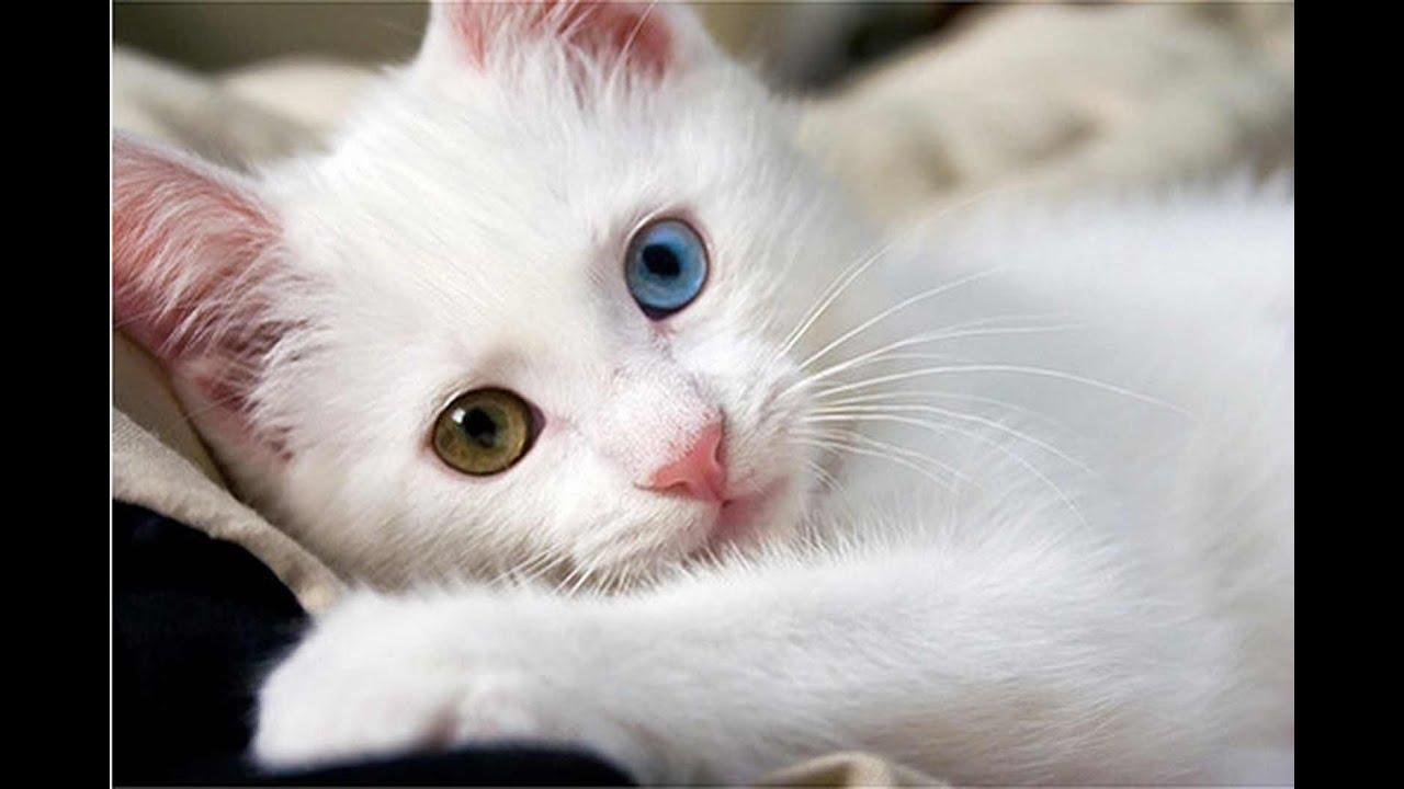 صور صور قطط كيوت , اجمل القطط المميزه بالصور