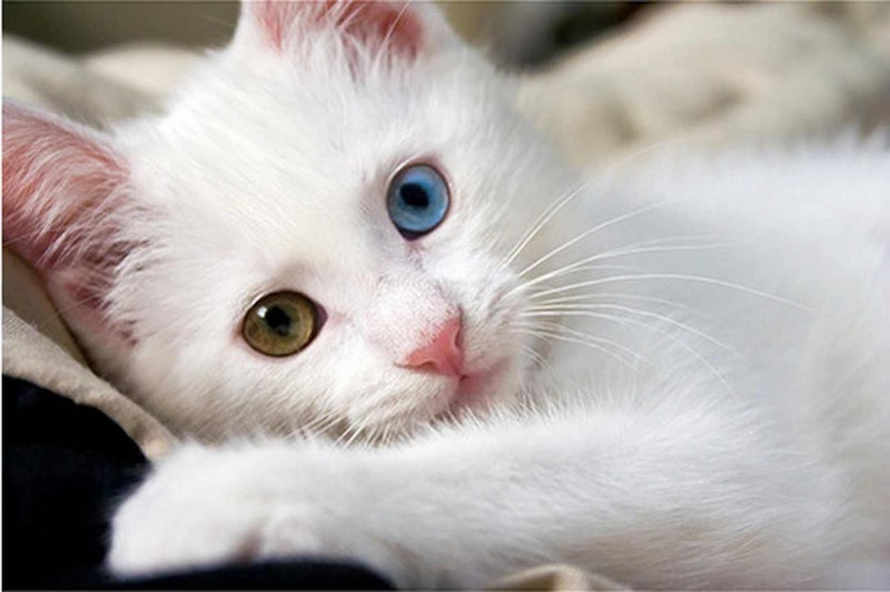 صورة اجمل صور قطط , صور مميزه عن القطط