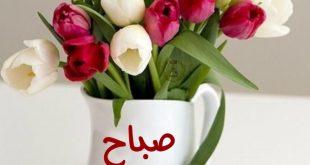 صور صور ورد صباح الخير , الورد مرتبط بالصباح